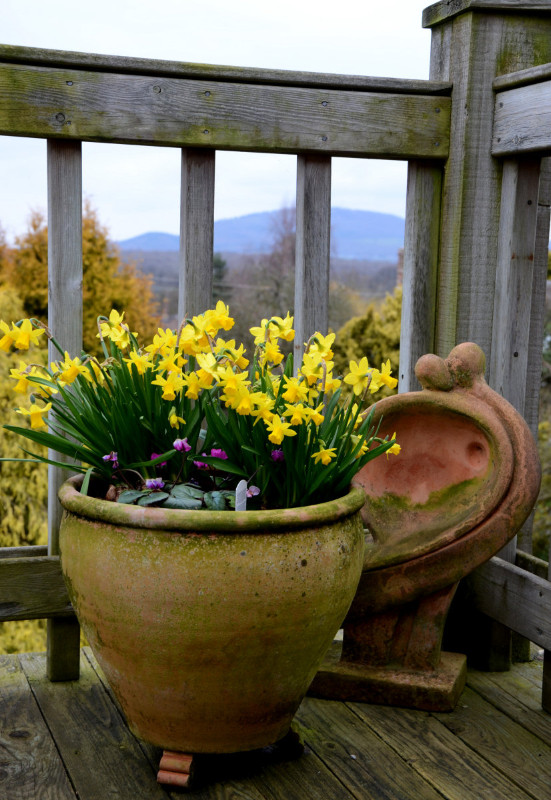 flower-pot-3