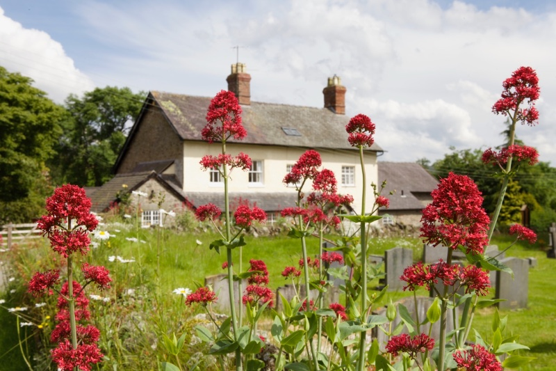 coach-house-norbury-summer-flowers